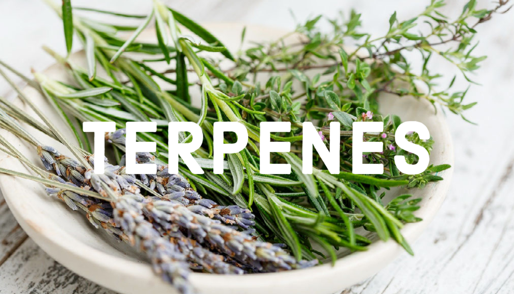 Terpenes Are Important, But What Are They?