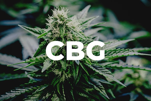 CBG, the Mother of All Cannabinoids